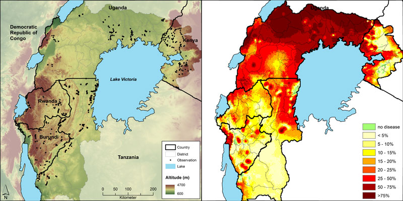 Observation locations of BXW disease incidence as black dots and altitude as background (left map) and percentage land that is infected by the disease (right map).